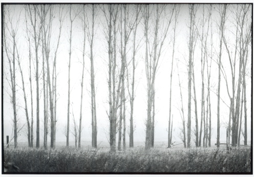 """Trees in the Mist"" by Beate Waetzel"